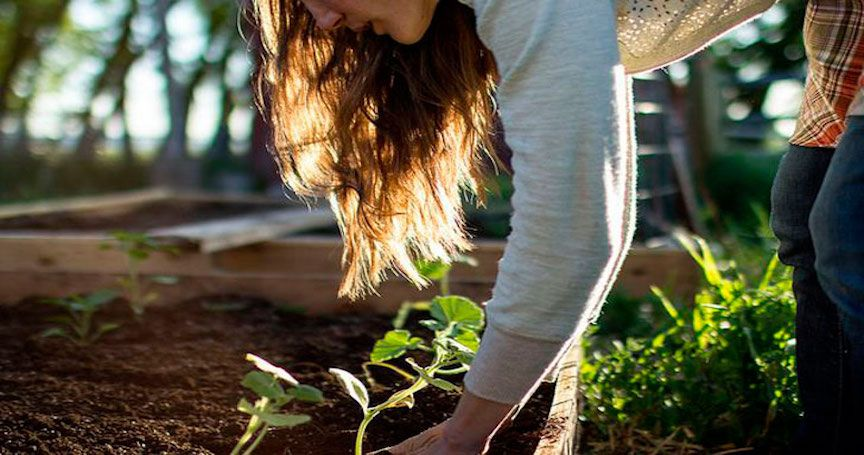 12 Organic Gardening Tips For Anyone On A Budget