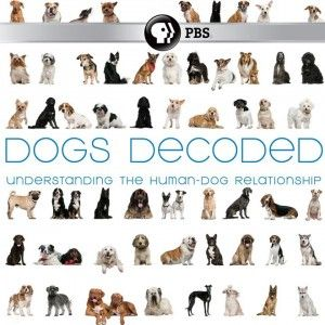 DogsDecoded_PBS-300x300