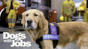 Dogs_with_Jobs_title_card