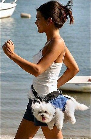 dog-carrier