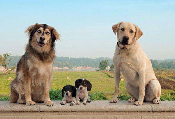 dog_family_photo-600x408