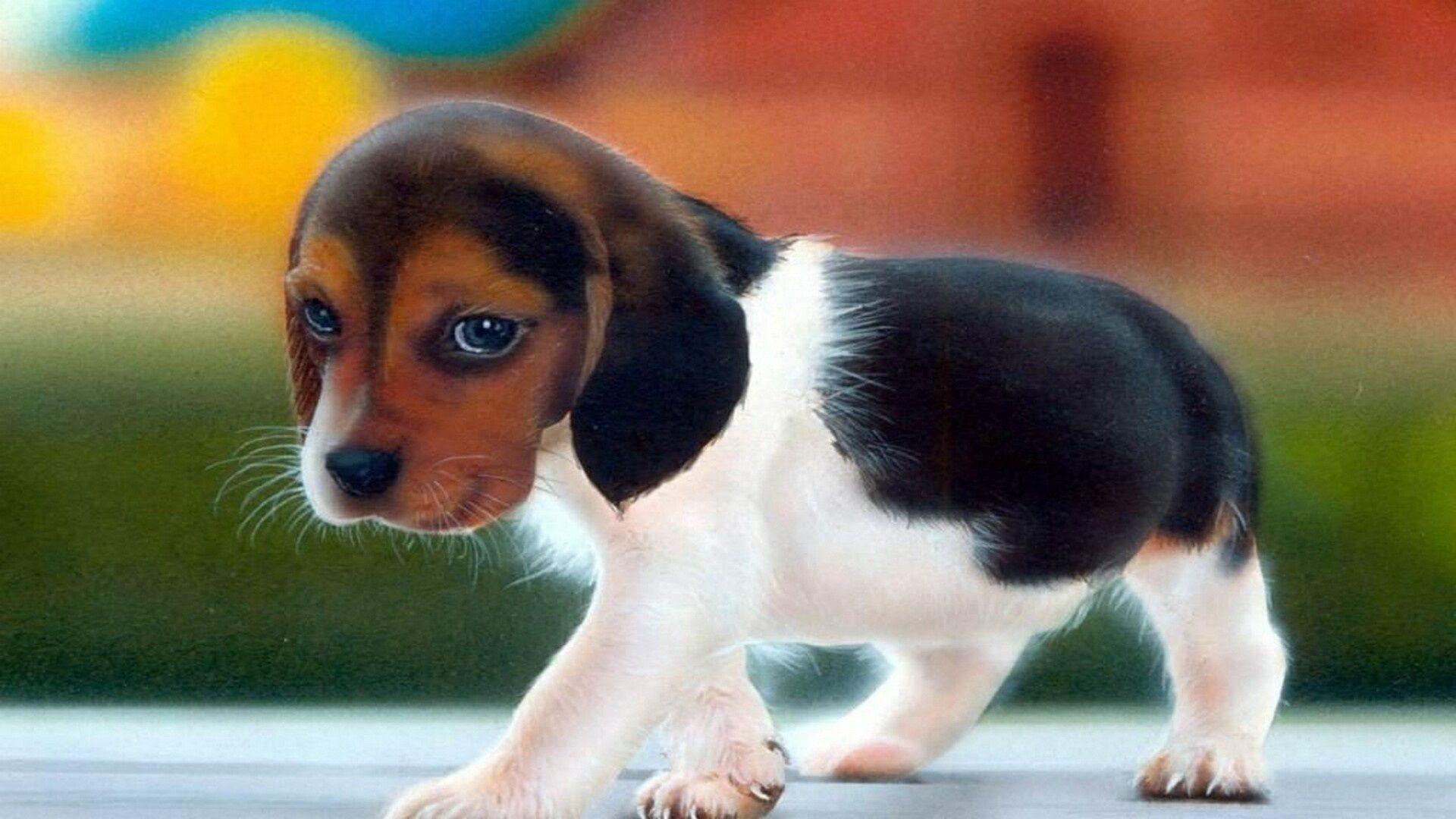 sad-cute-dog-high-resolution-wallpaper-for-desktop-background-download-dog-photos-free