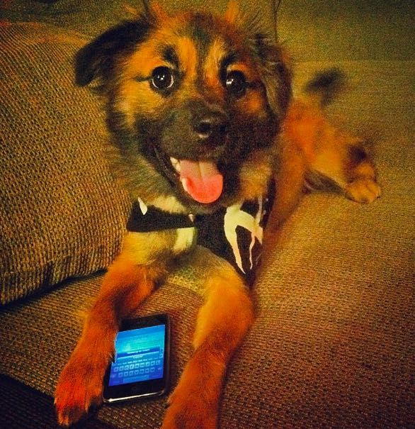 text-from-dog