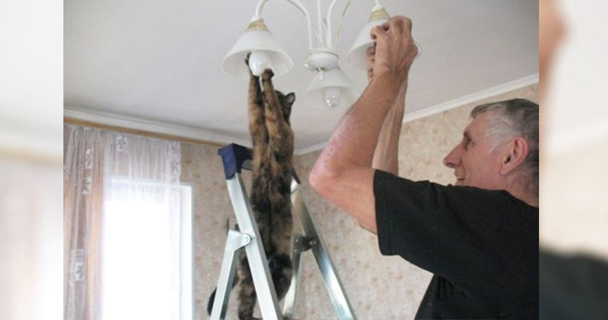 13 Cats Who Think They Are Human