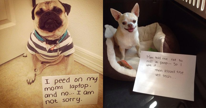 20 Of The Nastiest Dog Shaming Confessions