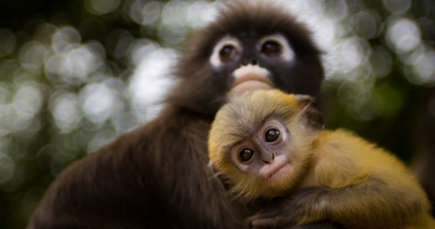 14 Adorable Wild Species You'll Want to Cuddle