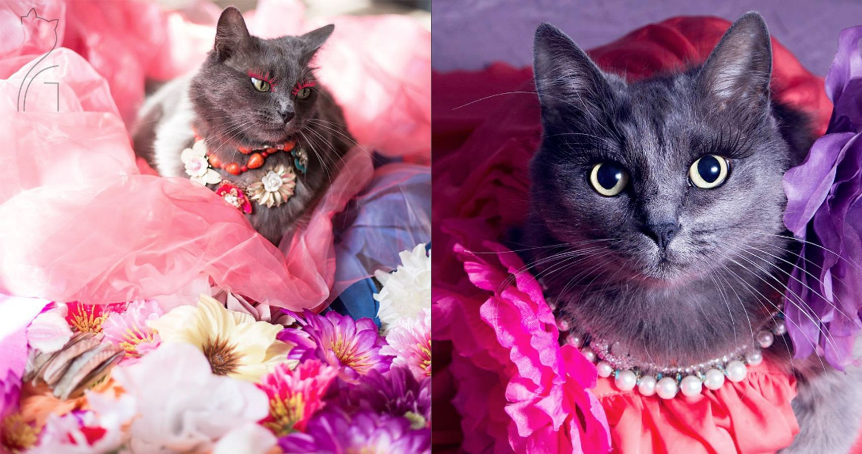 Meet Pitzush, the Most Glamorous Kitty in History