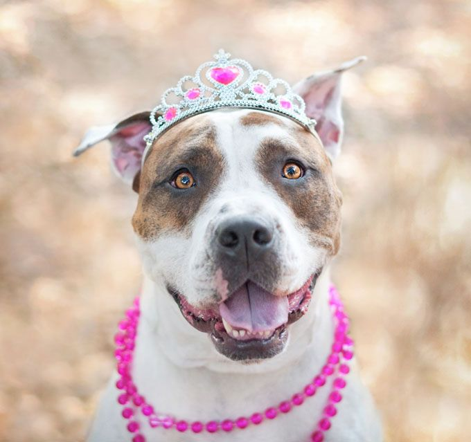 "15 Pit Bull ""Facts"" That Are Completely Untrue"