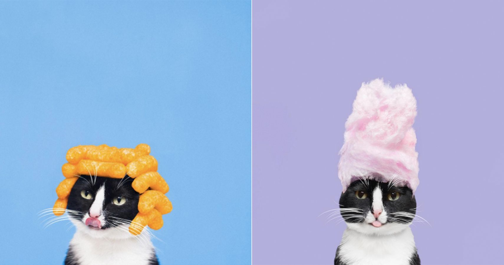 Meet Princess Cheeto, The Most Fabulous Cat Model In All Of NYC