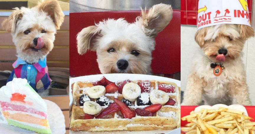 15 Times Popeye The Foodie Dog Made Us All Hungry