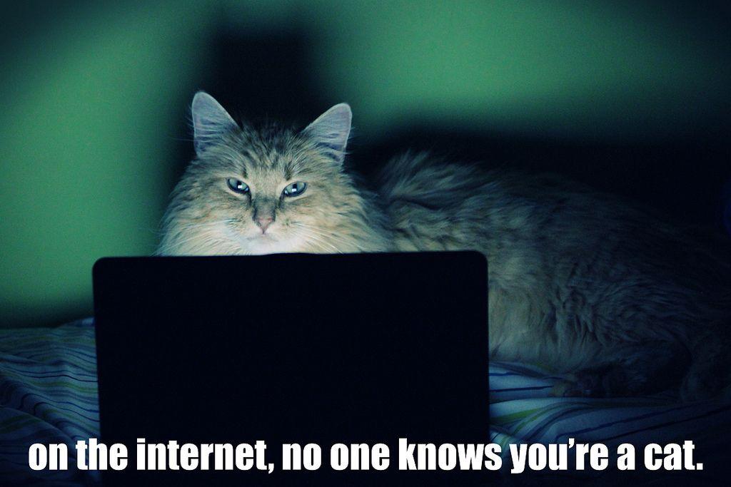 Via Funnycats4u