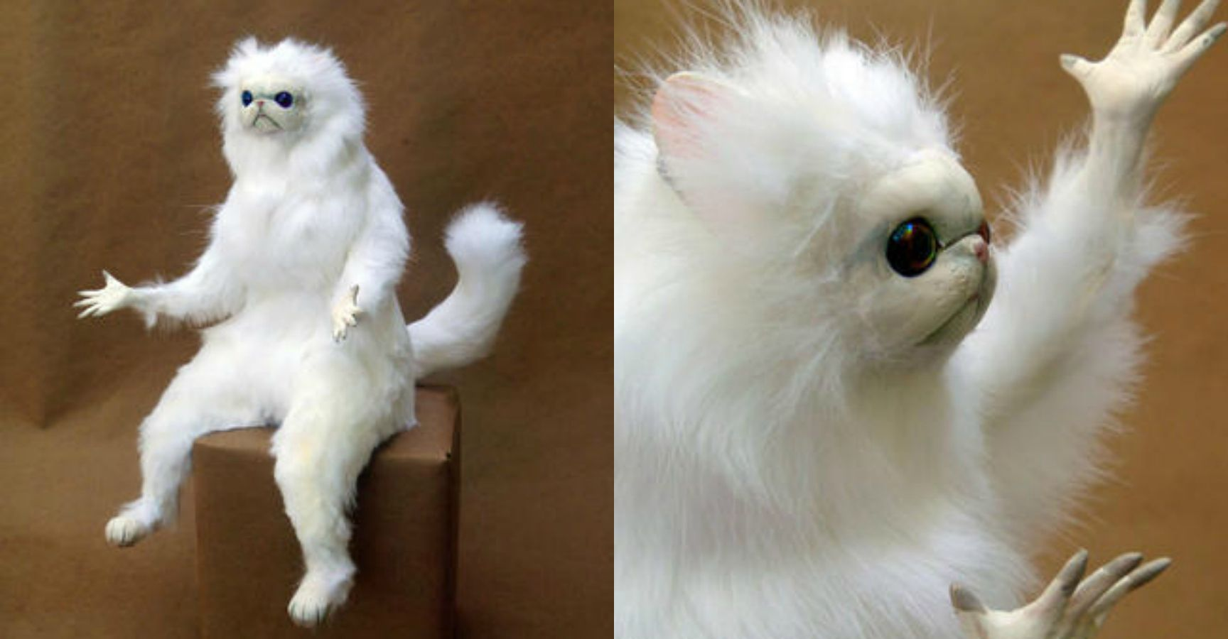 15 Hysterical Persian Cat Room Guardian Memes That Will Speak To Anyone