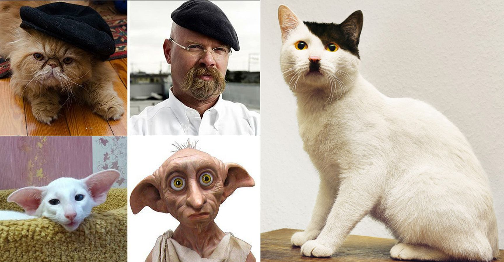 These 15 Cats That Look Like Celebrities Will Totally Baffle You