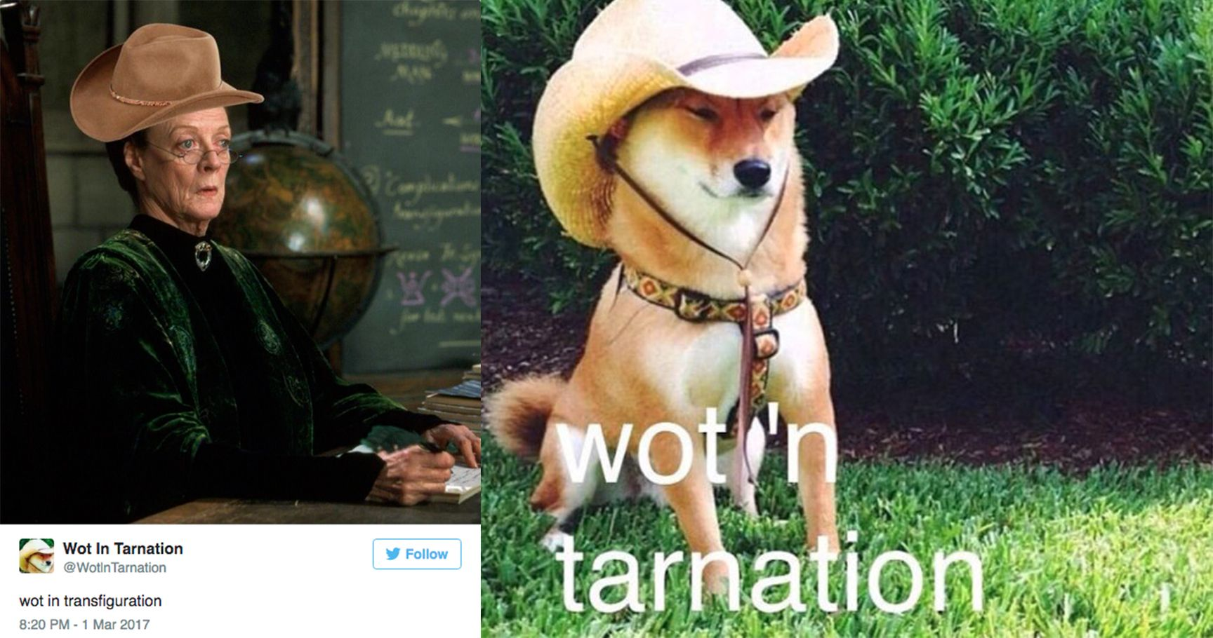 "15 Of The Best ""Wot in Tarnation"" Memes"