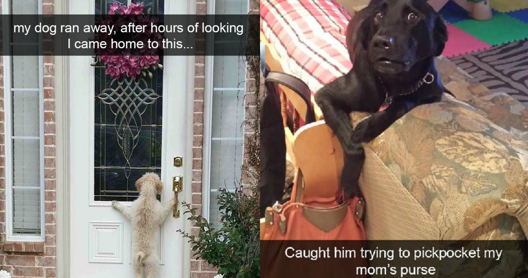 15 Hilarious Dog Snaps That Will Make Anyone LOL And Say 'Aww'