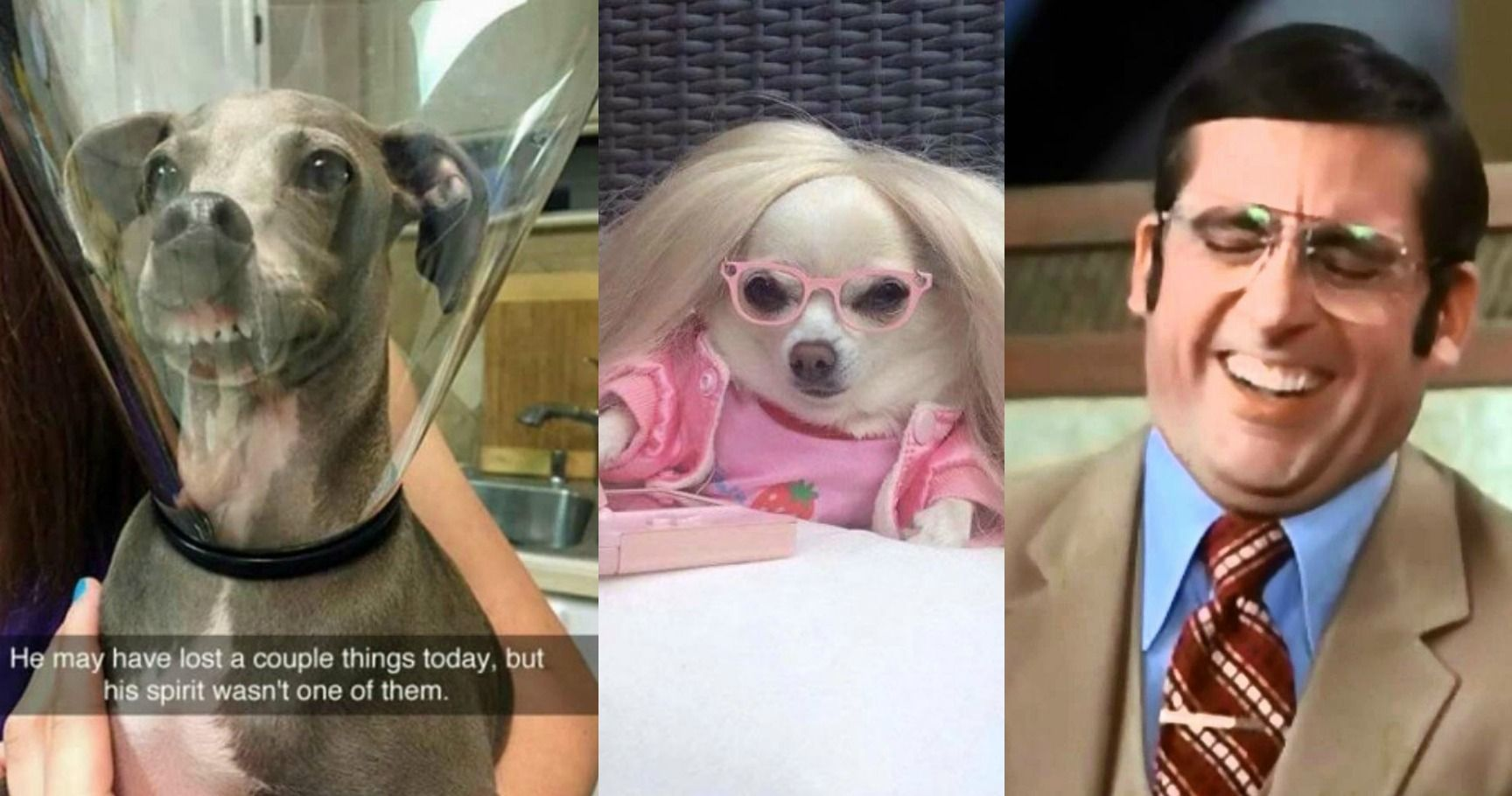 15 Hilarious Posts About Dogs That Will Make You Ugly Laugh