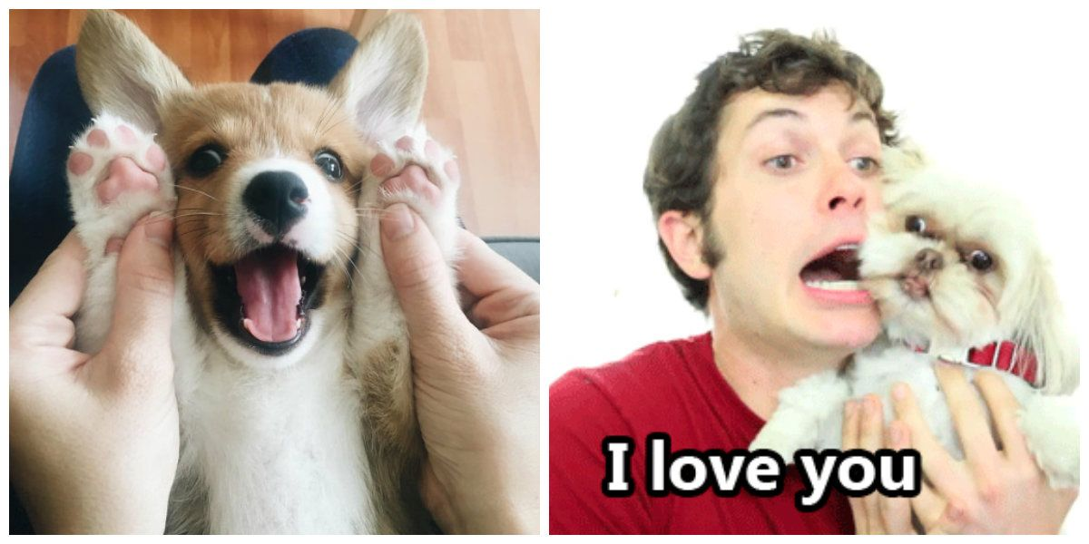 15 Signs You're Completely Obsessed With Dogs