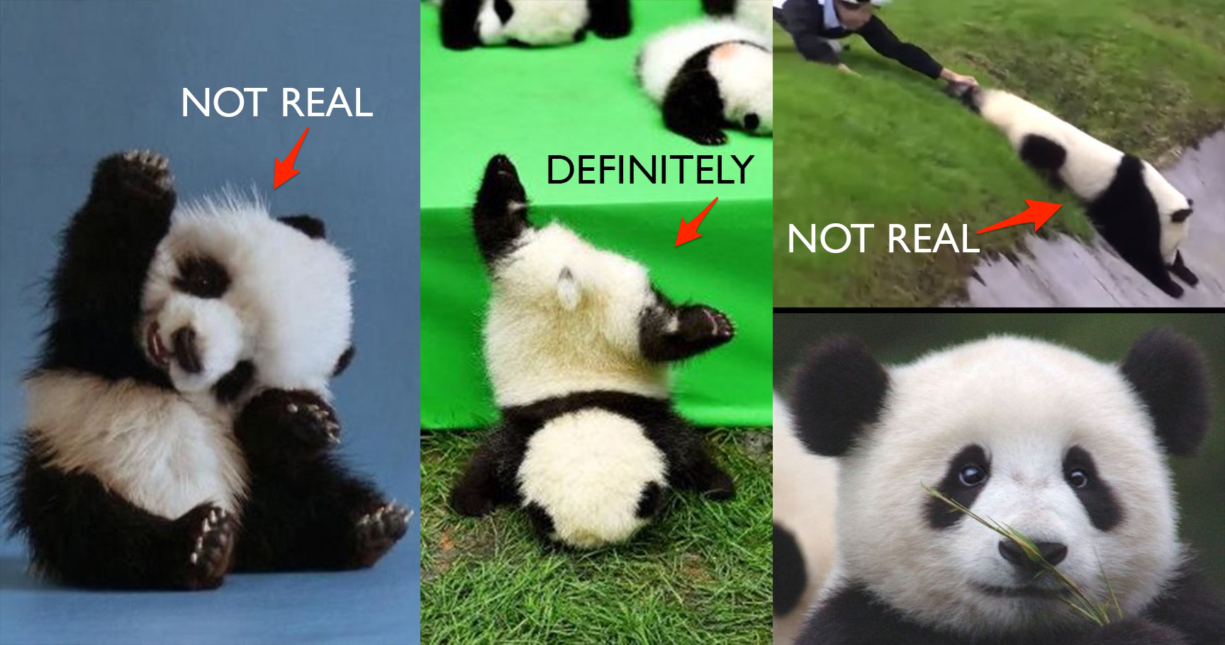 15 Times Pandas Proved They Weren't Real Animals