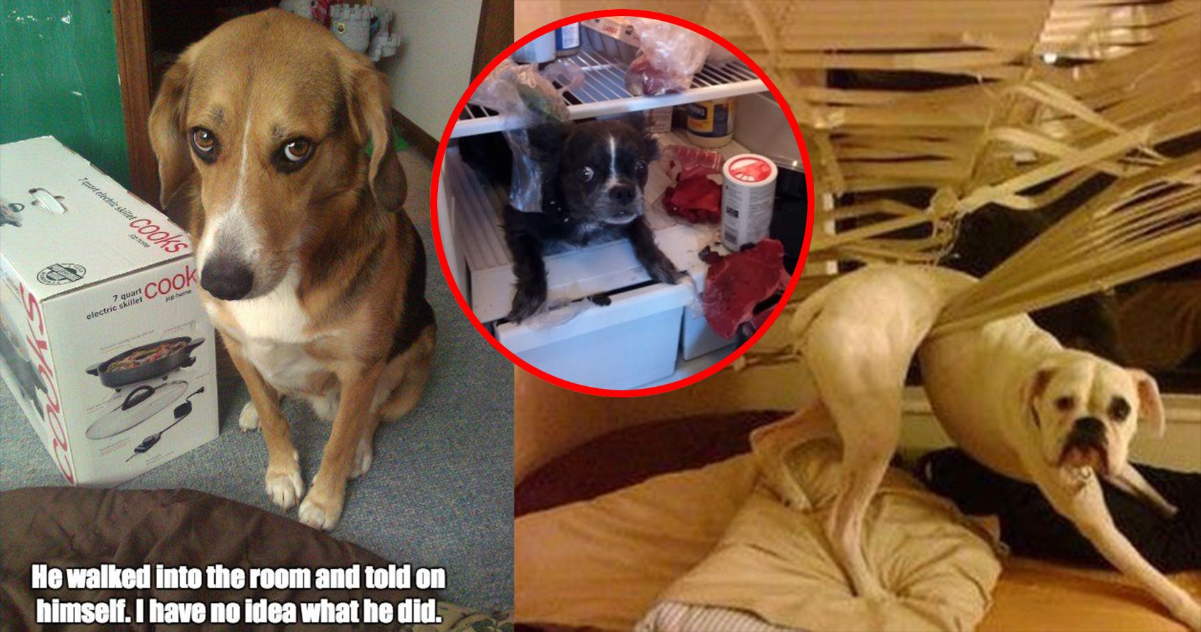 15 Hilarious Pet Messes That Are So Funny Their Owners Can't Be Mad