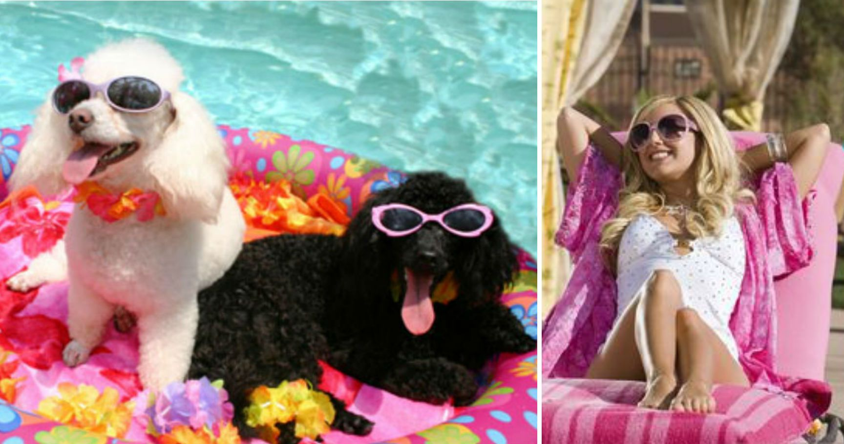 15 Adorable Pets Who Are Our Summer Vacation Spirit Animals
