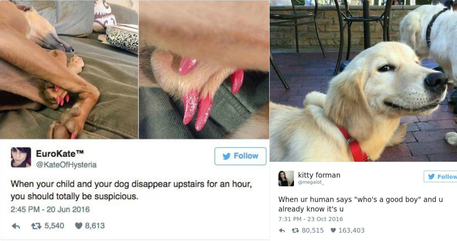 15 Tweets Every True Dog Lover Will Understand