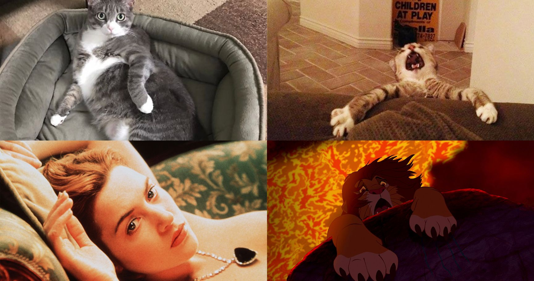15 Hysterically Dramatic Cats That Give Actors A Run For Their Money