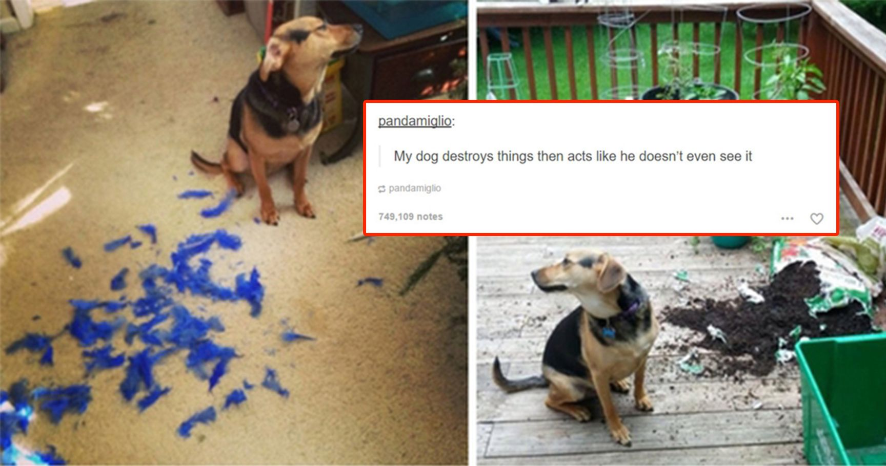 15 Hilarious Cats And Dogs Who Are So Extra