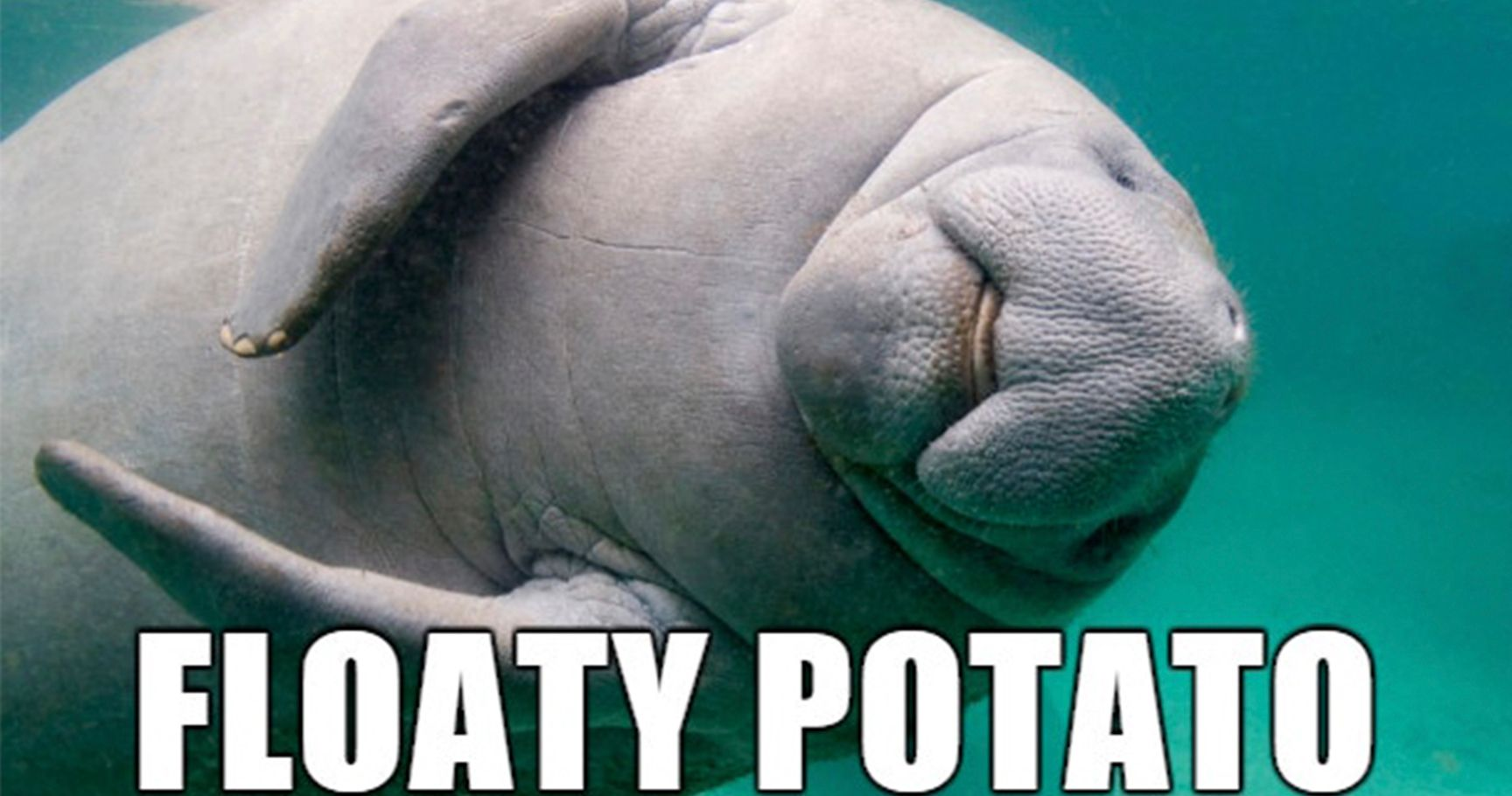 15 Hilariously Appropriate New Names For Animals That Will Have You In Tears