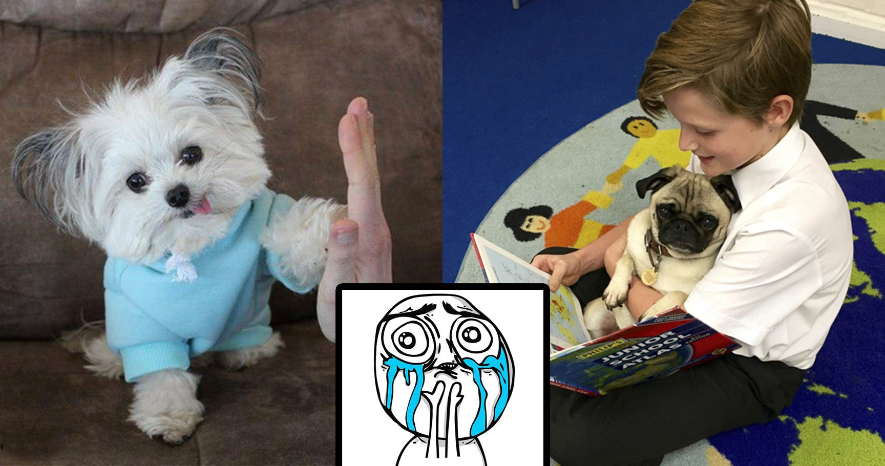 15 Therapy Dogs That Broke The Damn Internet