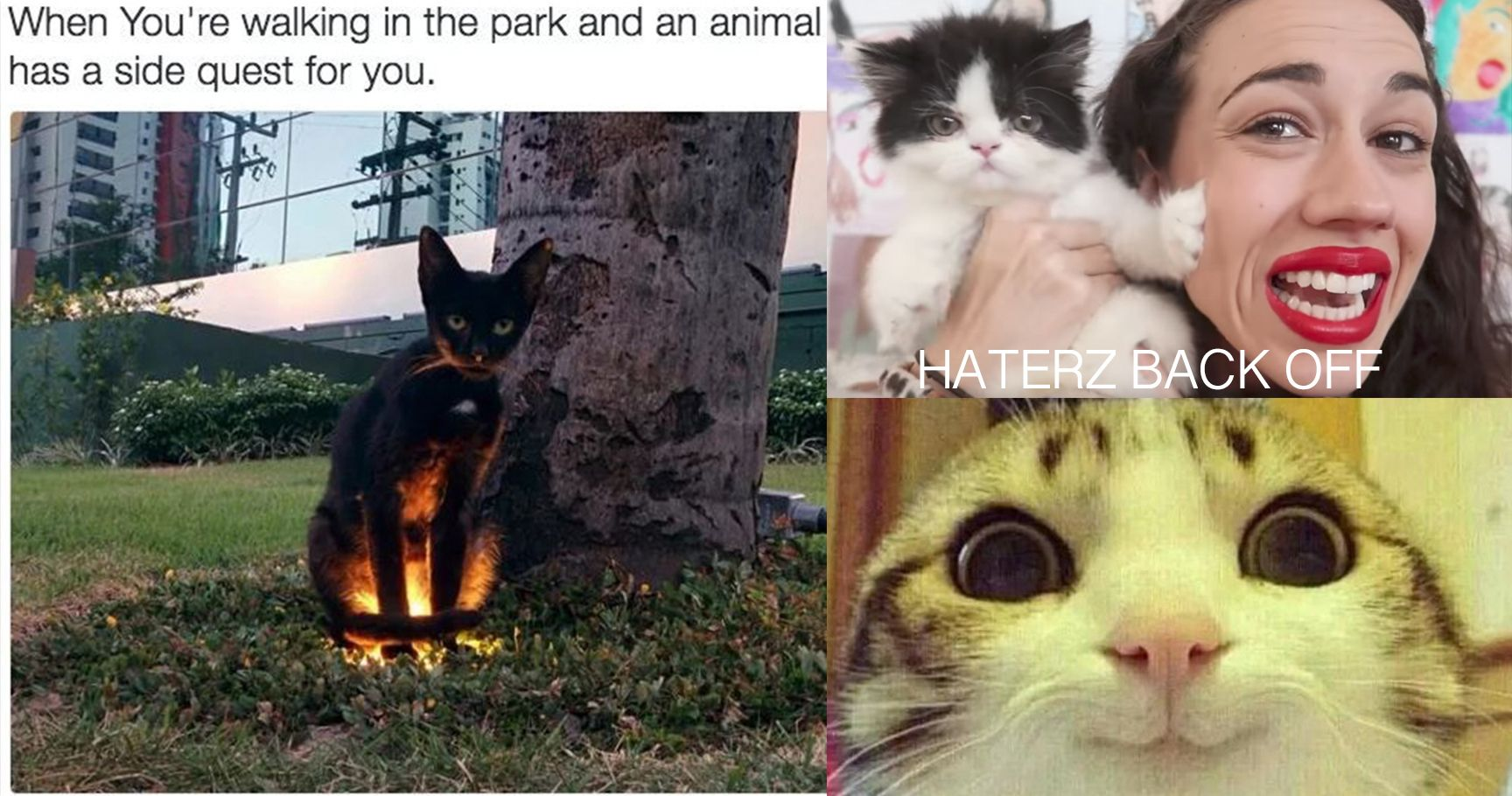 16 Cats That Are Cool AF