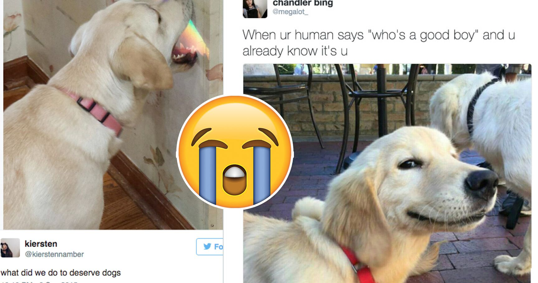 15 Tweets About Animals (That Will Make Your Cold Dead Heart Melt)