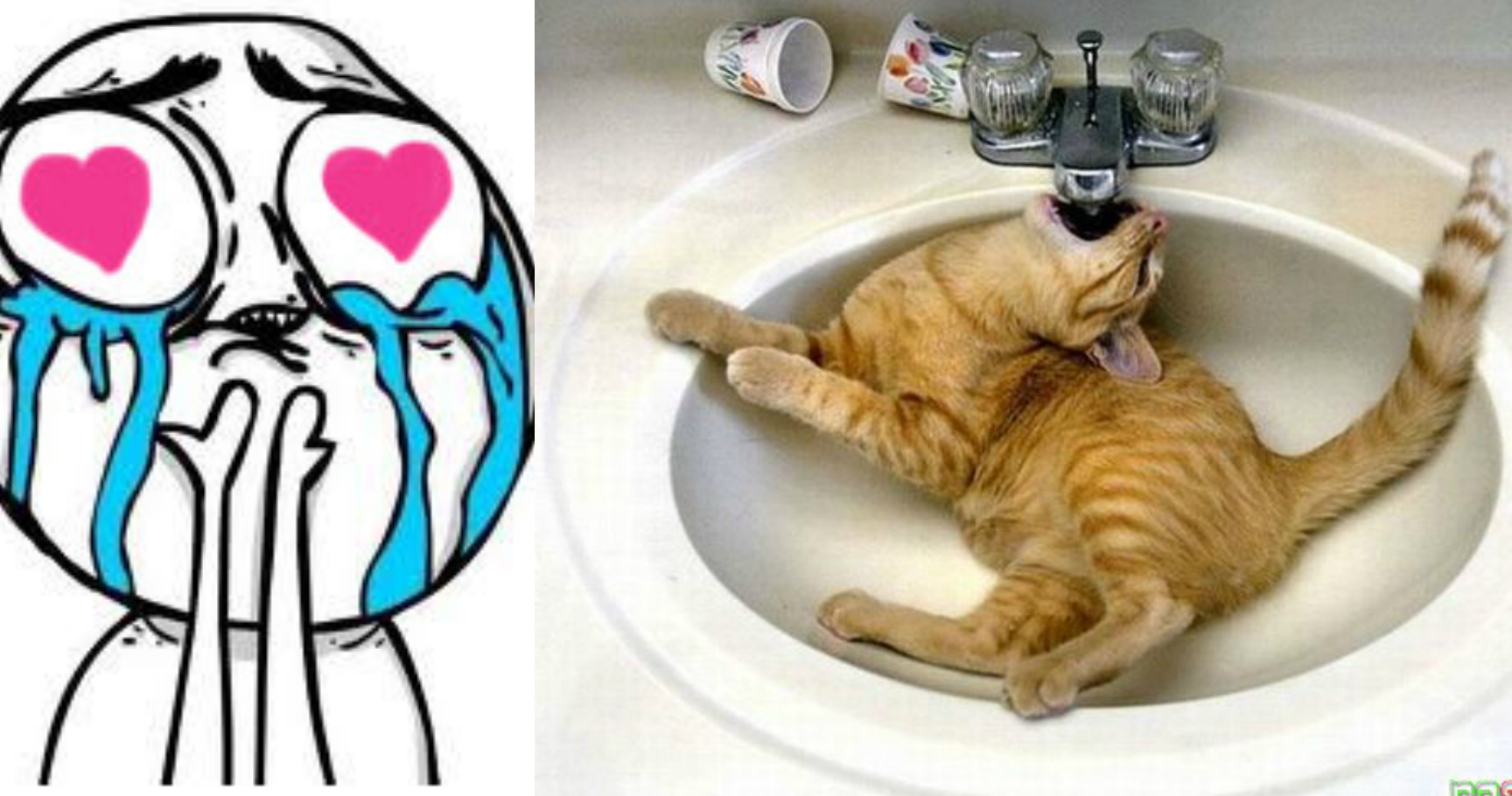 15 Derpy Cats Who Hilariously Fail At Life