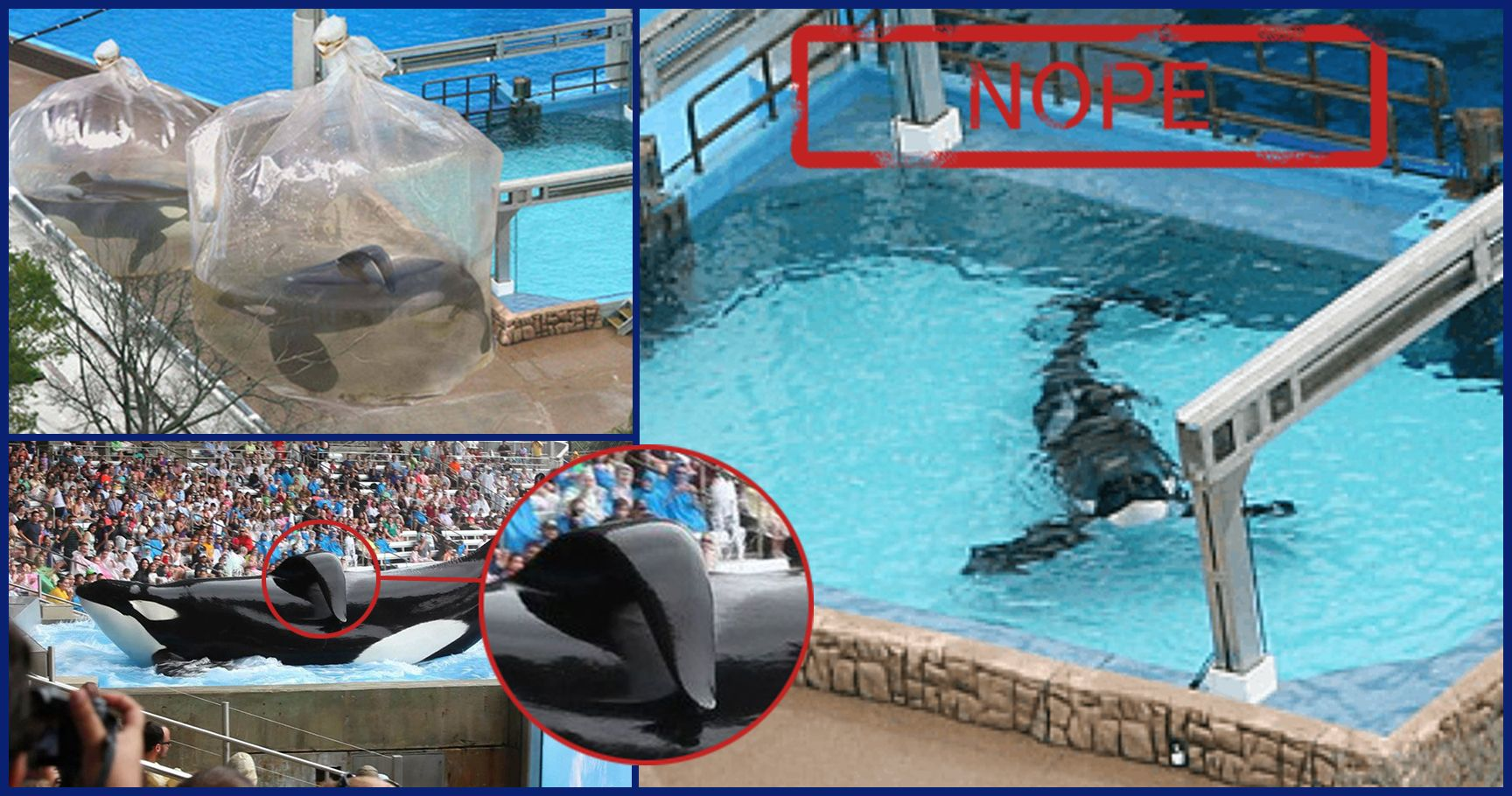 Outrageous Images That Prove Seaworld Should Be Shut Down