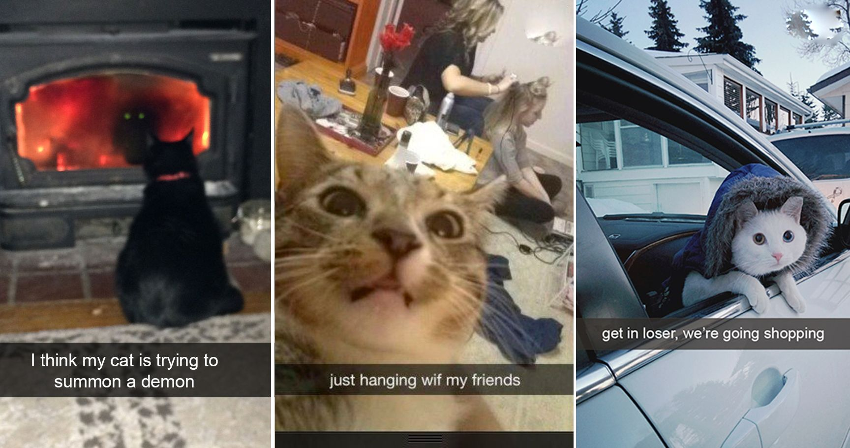 15 Cats That'll Forever Sit In The Snapchat Hall Of Fame