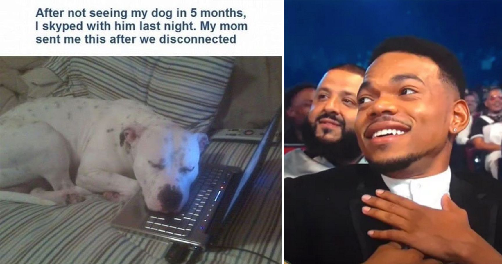 18 Times Dogs Were Just Too Good For Us
