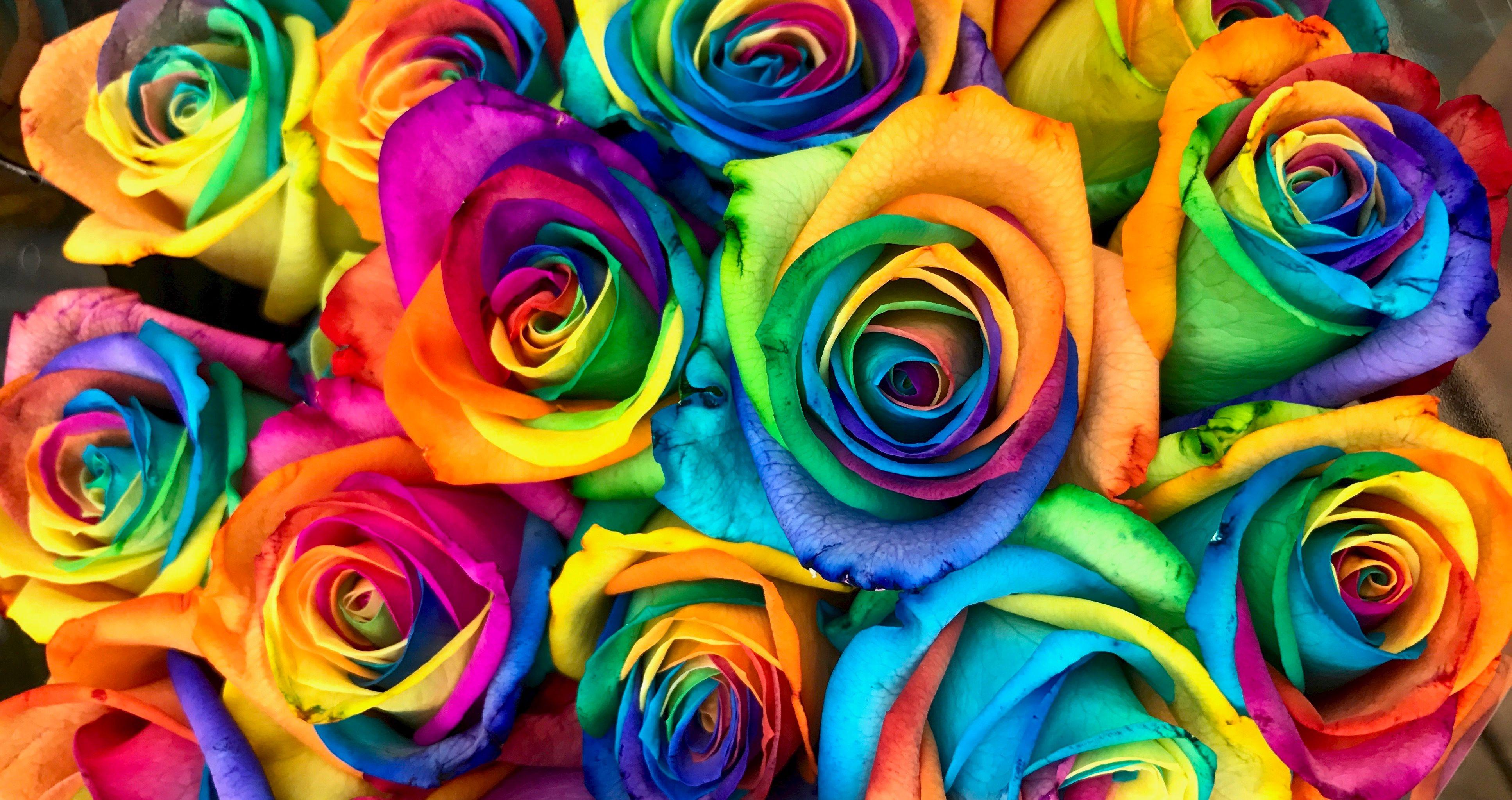 DIY Summer Rainbow Roses | TheThings