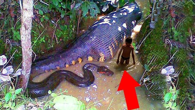 10 Most Dangerous Creatures Discovered In The Amazon